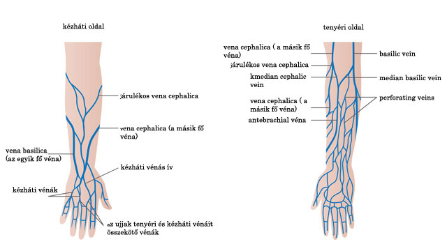visszér a vér a vénákból származik hogyan kell használni a szerecsendiót a visszér ellen