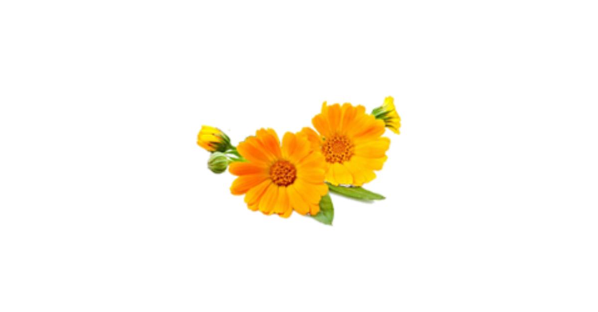 Visszérgyulladás – Vadgesztenye Krém, Körömvirág Krém