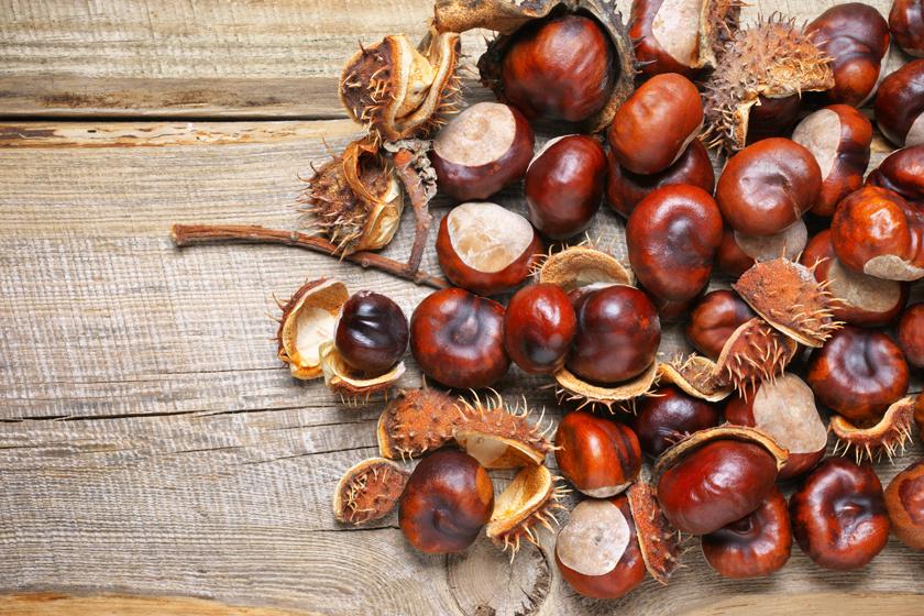 gesztenye gyümölcs tinktúra visszér van-e diéta a visszér ellen
