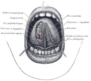 a nyelv alatti vénák visszér